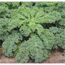 Semillas De Kale (kéil - Col Rizada)