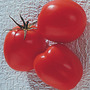 Tomate Santamelia Semillas Para Plantas