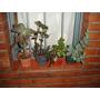 4 Plantas De Jardín: Carosas Y Suculentas