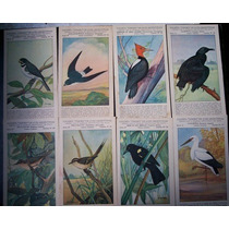 Tarjetas Aves Pájaros Sociedad Ornitológica Del Plata