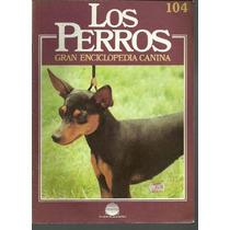 Enciclopedia Canina Perro Harlequin Pinscher Kromfohrlan 104