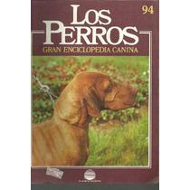 Enciclopedia Canina Perro Grifon Pelo Duro Barbet Stabyho 94