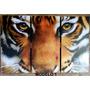 Cuadro Triptico Tigres, Animales, Etnicos