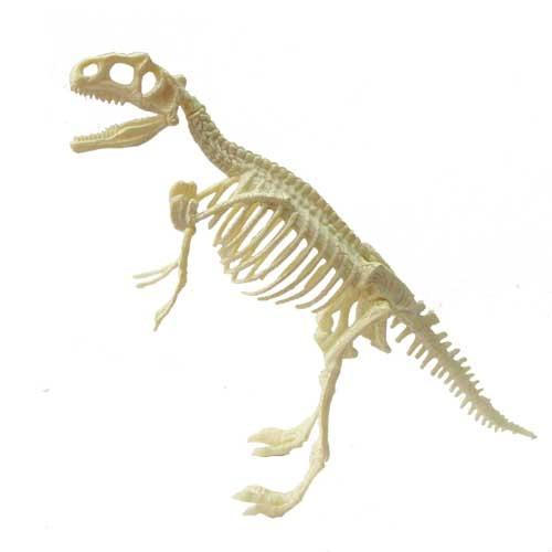 Esqueleto Dinosaurio Tiranosaurio Triceraptos Paleontologia